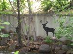 Cute deer, right?